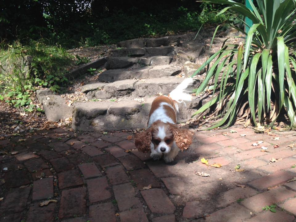 Dog Walker in Park Gate