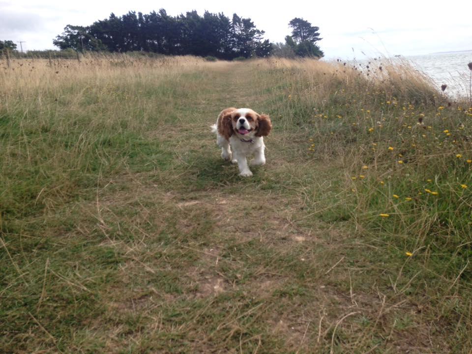 Dog Walker in Whiteley