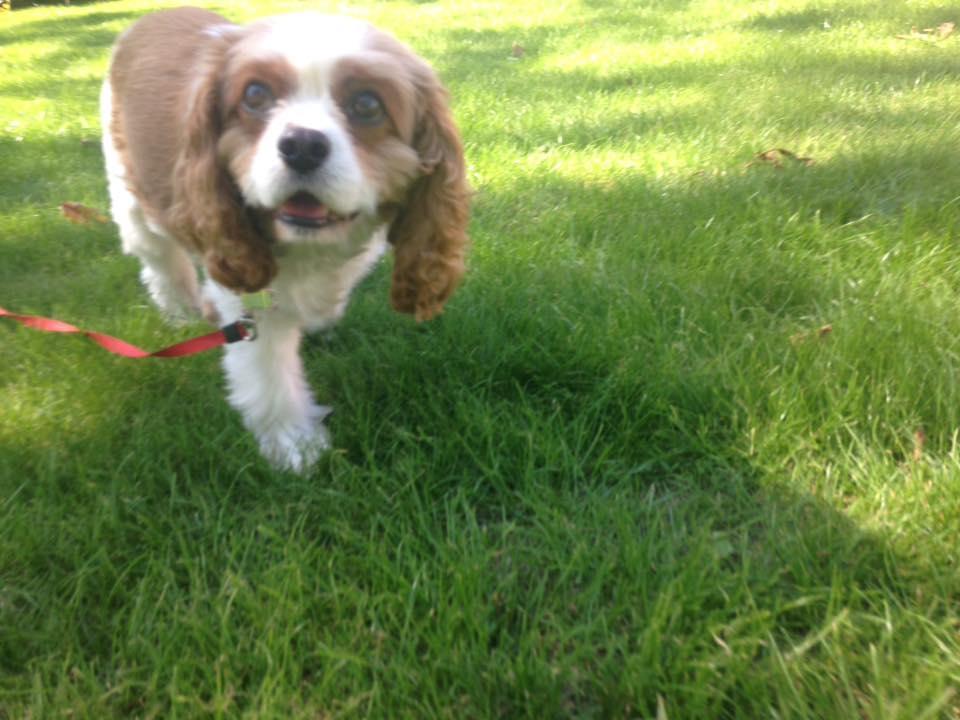 Dog Walker in Swanwick