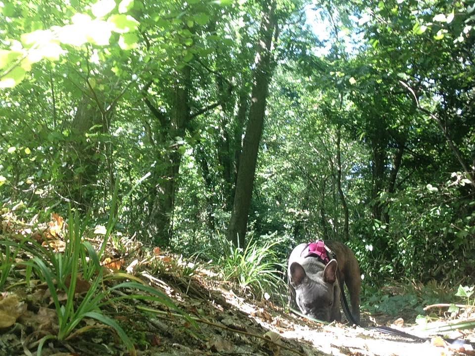 dog jogger in swanwick