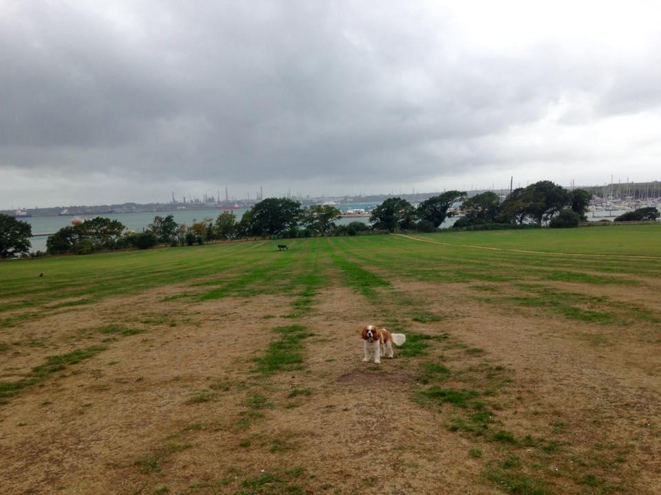 off lead dog walker warsash